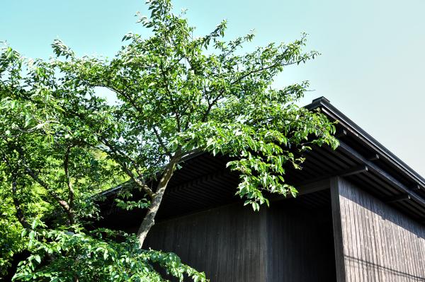 Minamidera japan kagawa naoshima