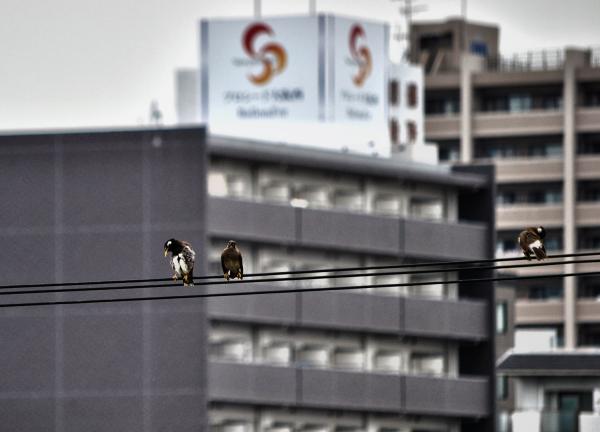 osaka umeda japan yodogawa bird