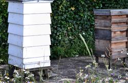 kew-gardens london england bee-hive