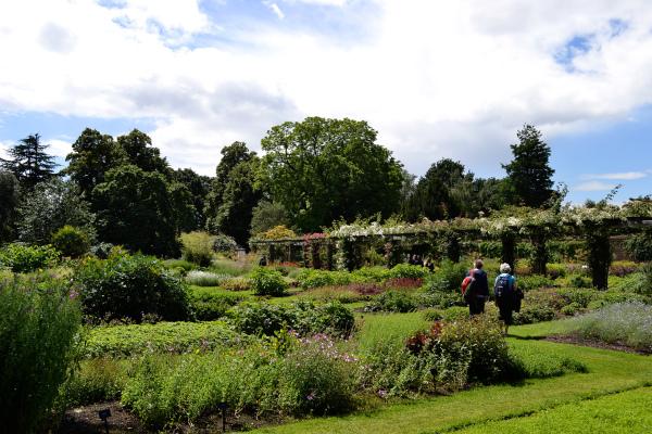 kew-gardens london england flower tree garden