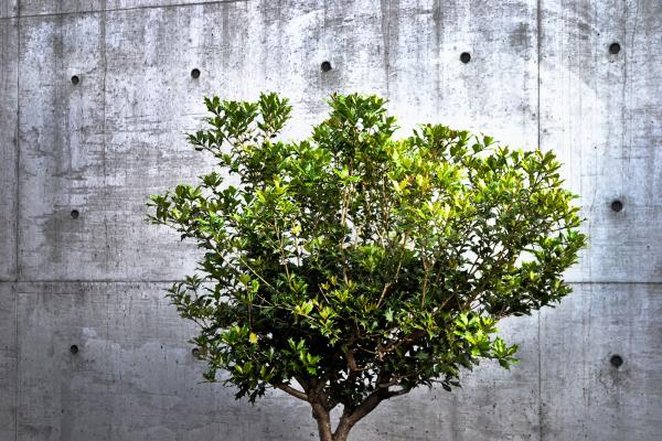 okayama omoto japan tree