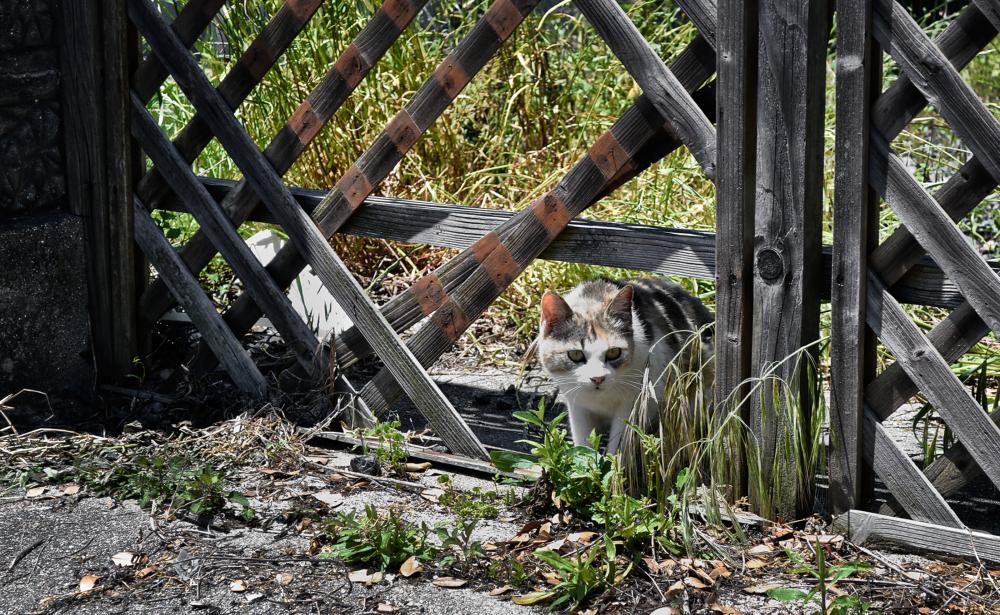 shikoku japan honjima cat