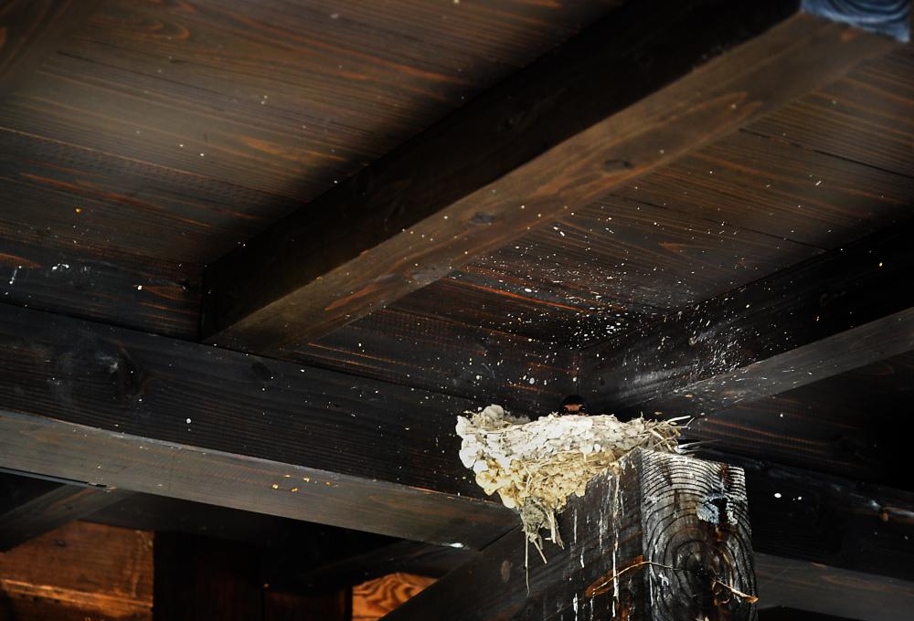 kotohira shikoku japan swallow bird nest kagawa