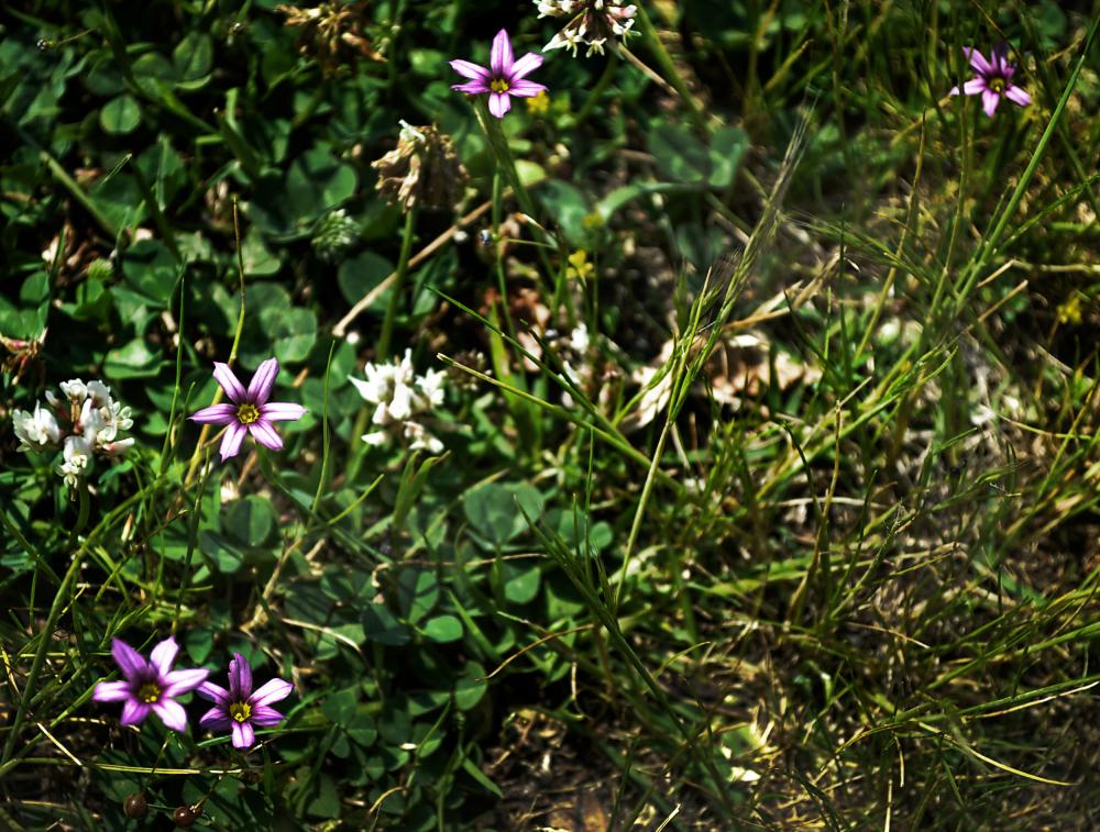 okayama japan tamano flower shibukawa