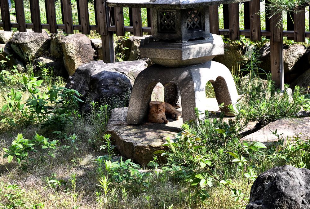 okayama kurashiki japan garden cat lantern