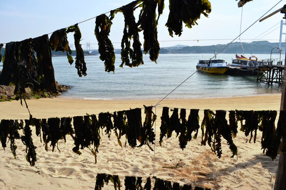 okayama kurashiki japan beach seto-naikai seaweed