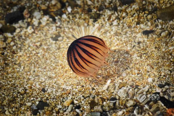 okayama kurashiki japan beach jellyfish
