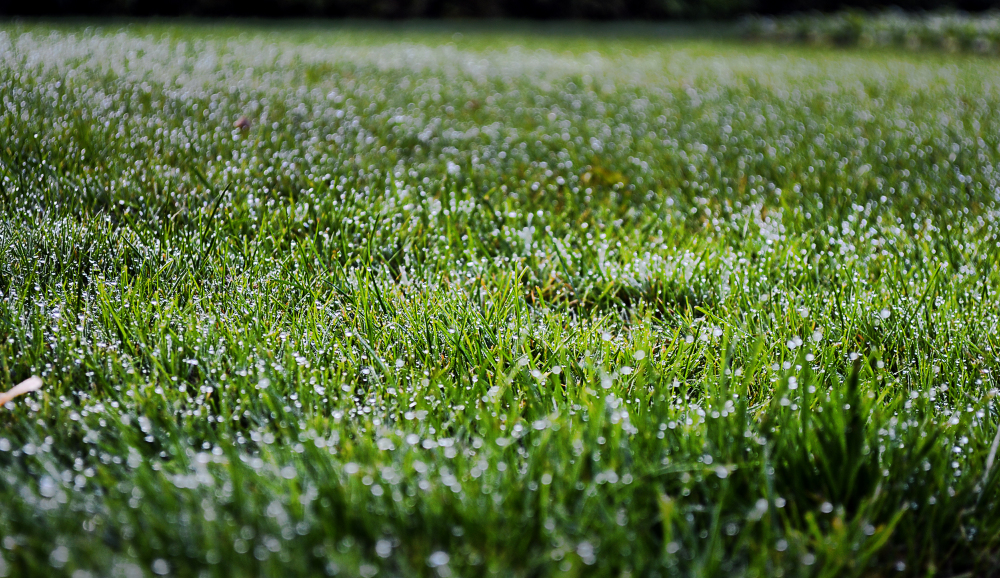 wisley garden england grass dew