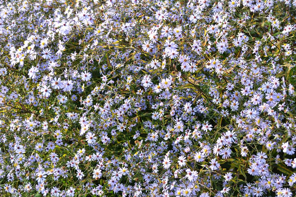 wisley garden england flower