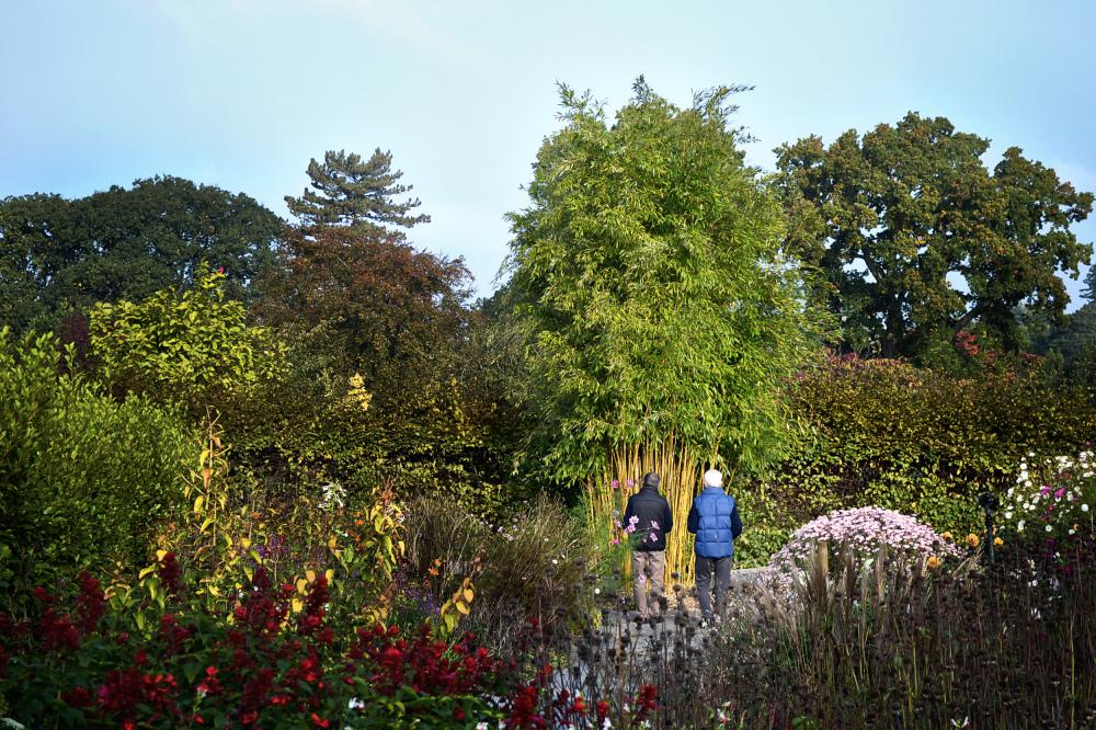 wisley garden england tree flower