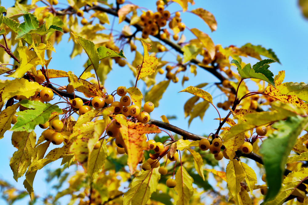 wisley garden england berry