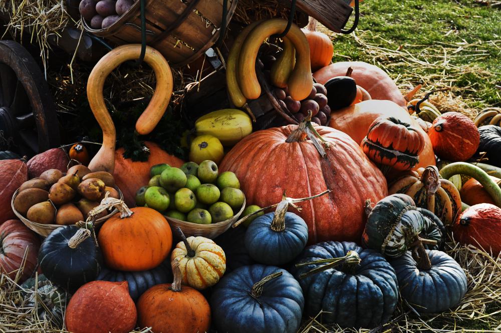 wisley garden england pumpkin