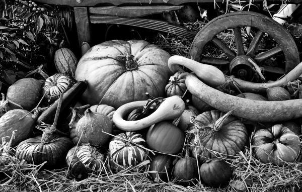Autumn Festival, Wisley 3