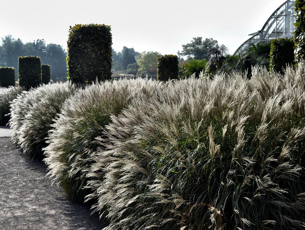wisley garden england grass