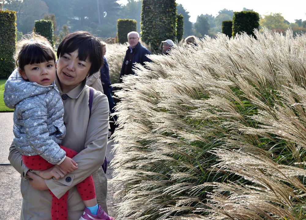 wisley garden england grass mia mayumi