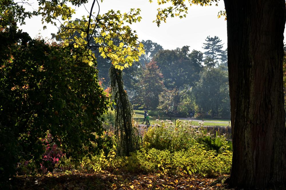 wisley garden england tree