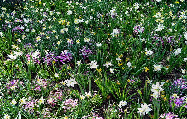 Springtime, Kew Gardens 2