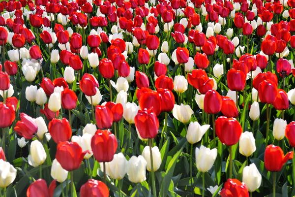 Springtime, Kew Gardens 3