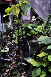 izakaya okinawa naha kankara-kan japan garden