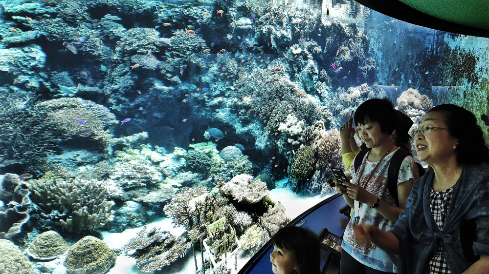 kinawa japan aquarium fish churaumi-suizokukan mia