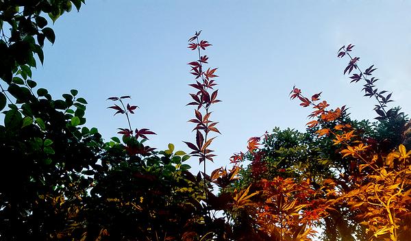 okayama japan garden tree