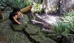 tokushima shikoku japan onsen garden koi fish mia