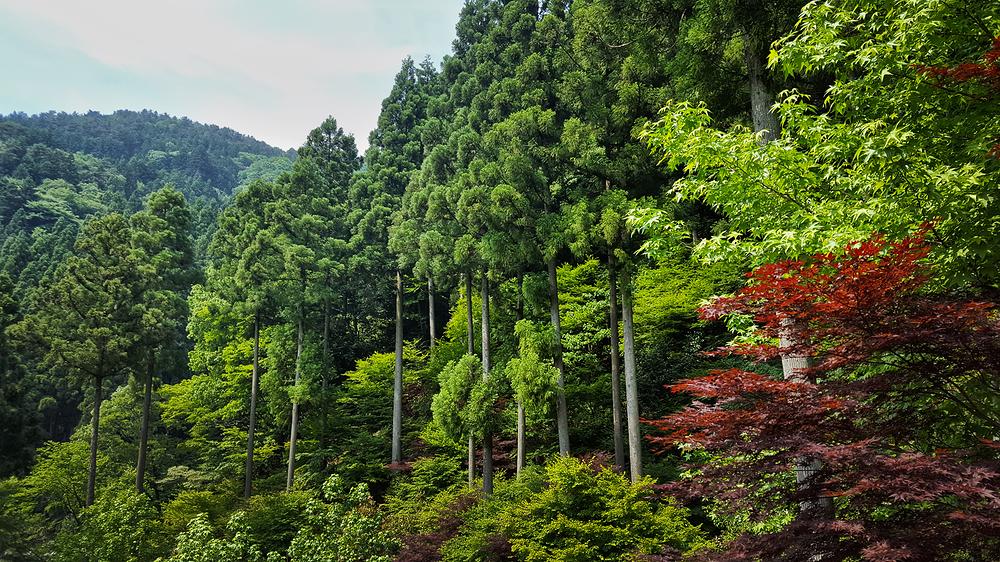tokushima shikoku japan onsen mountain tree