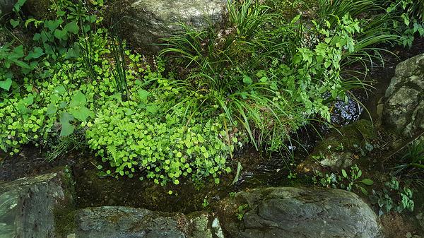 tokushima shikoku japan onsen garden stream