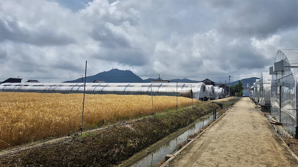 okayama japan rice field polytunnel farm