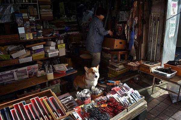 kochi shikoku japan market dog knife