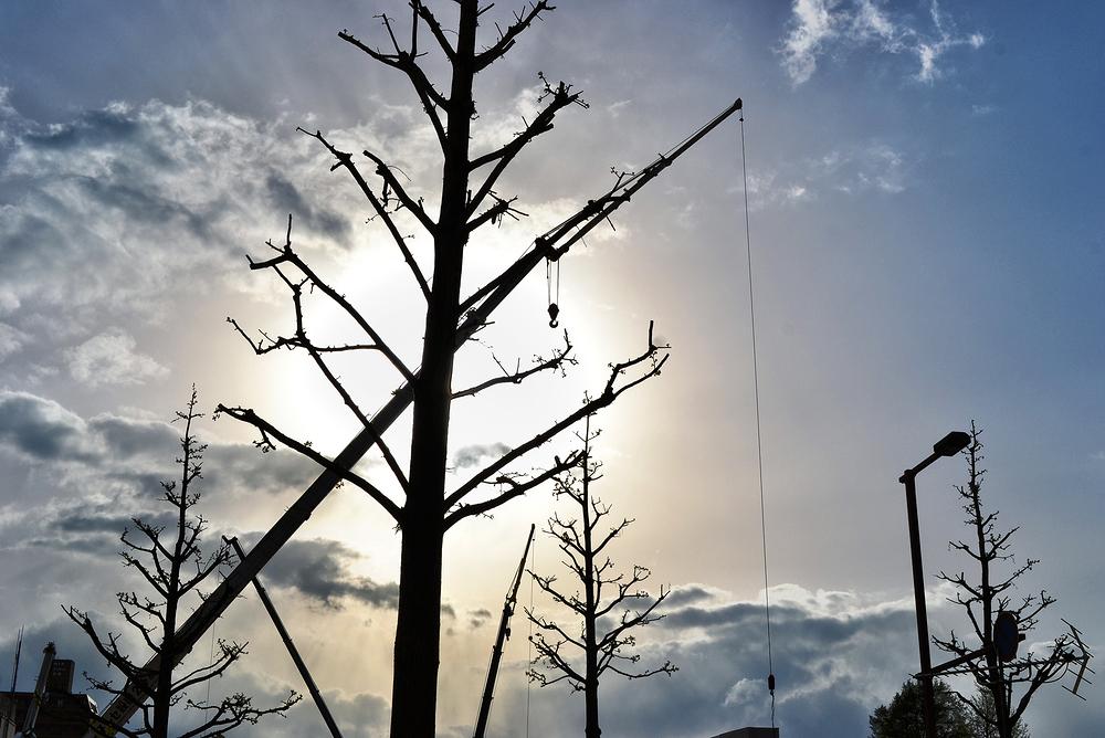 kochi shikoku japan street tree crane