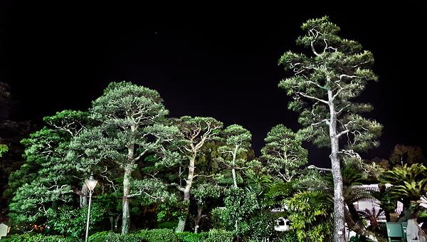 kochi shikoku japan tree