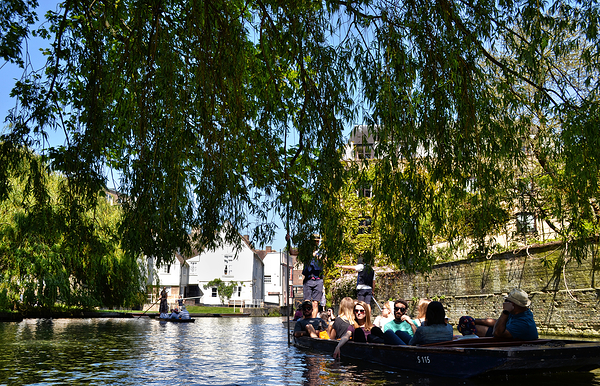 cambridge england river boat punt tourist tree