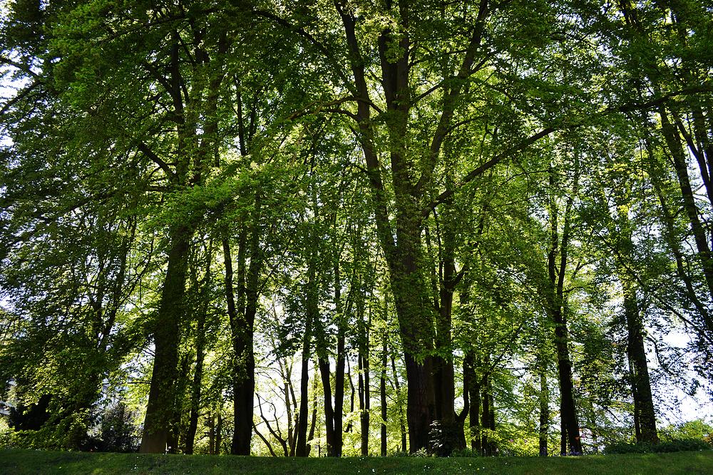 cambridge england river tree