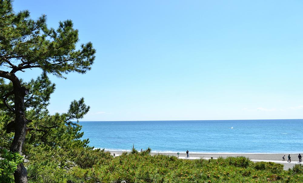 beach sea kochi katsurahama japan shikoku pine