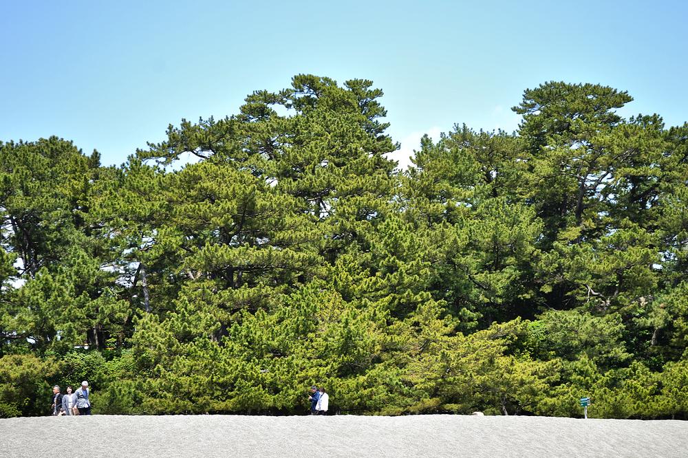 beach kochi katsurahama japan shikoku tree pine