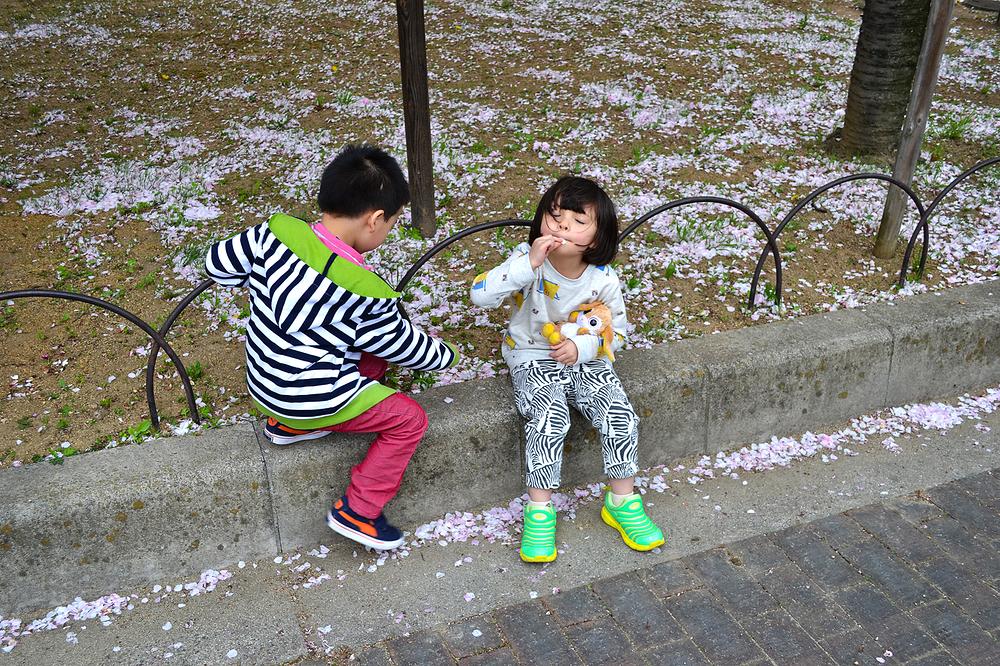 osaka japan osaka-mint sakura tree blossom