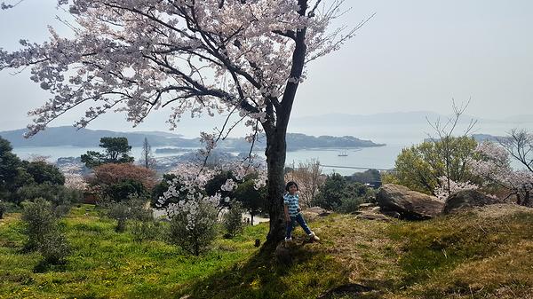 Ushimado Okayama Japan sakura tree sea seto-naikai