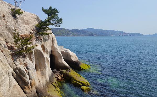 hiroshima japan okunoshima seto-naikai sea tree