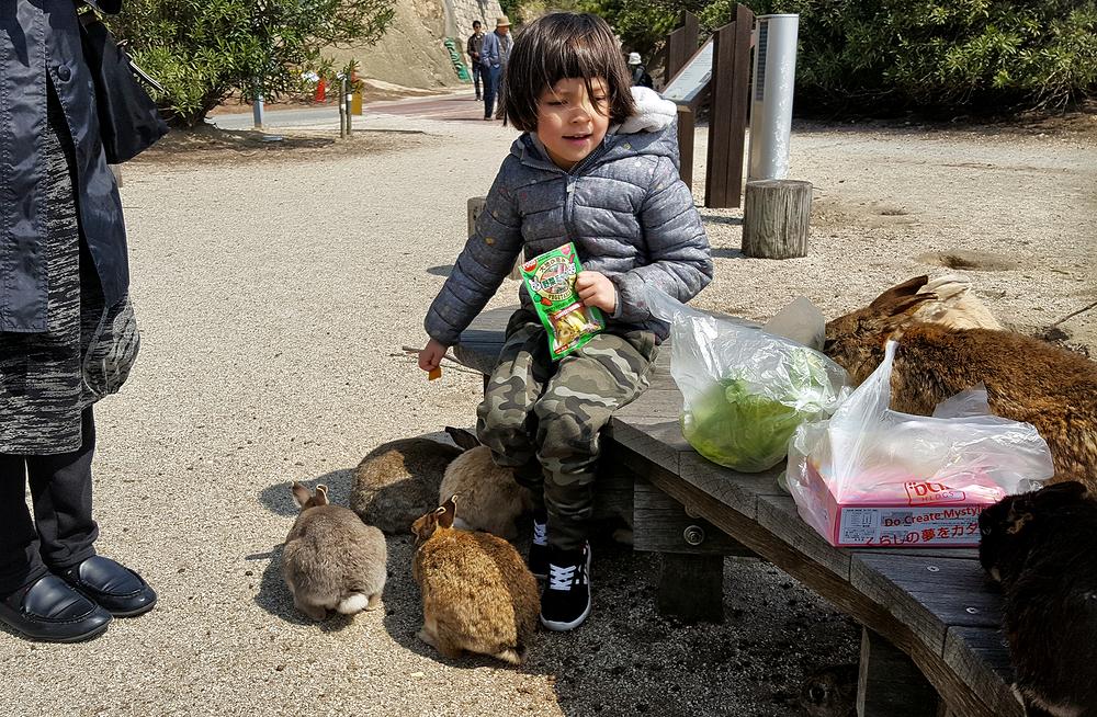 hiroshima japan rabbit mia okunoshima