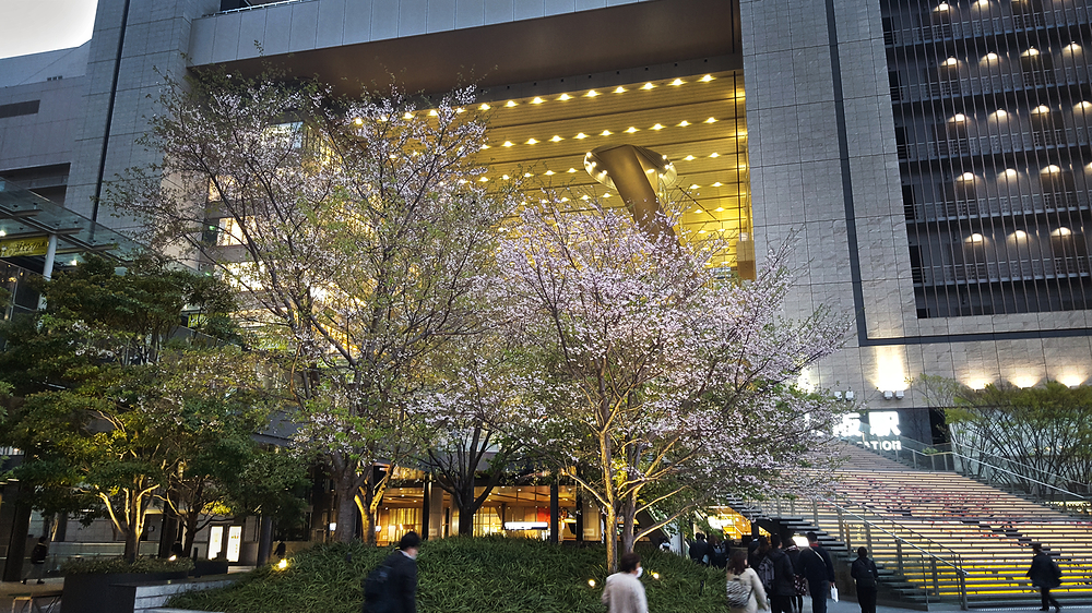 osaka umeda japan sakura blossom jr station