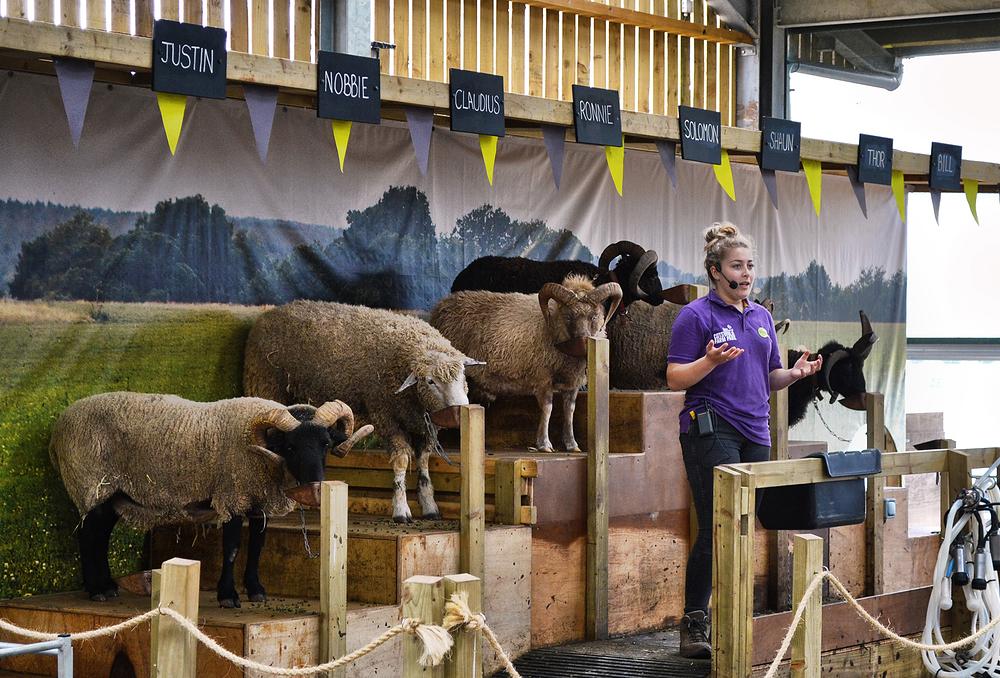 cotswolds england cotswolds-farm-park farm sheep