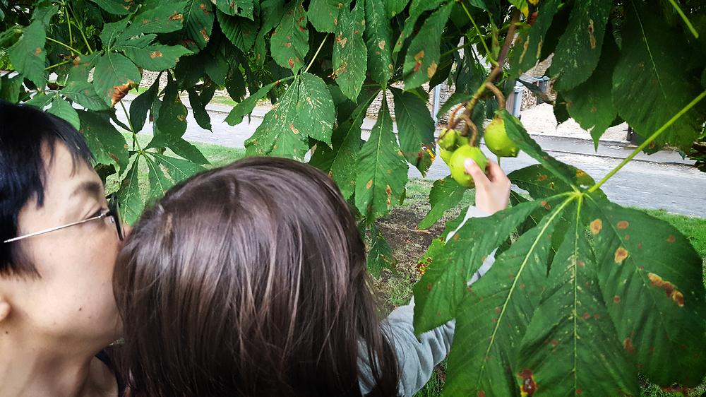 cotswolds england mia mayumi tree