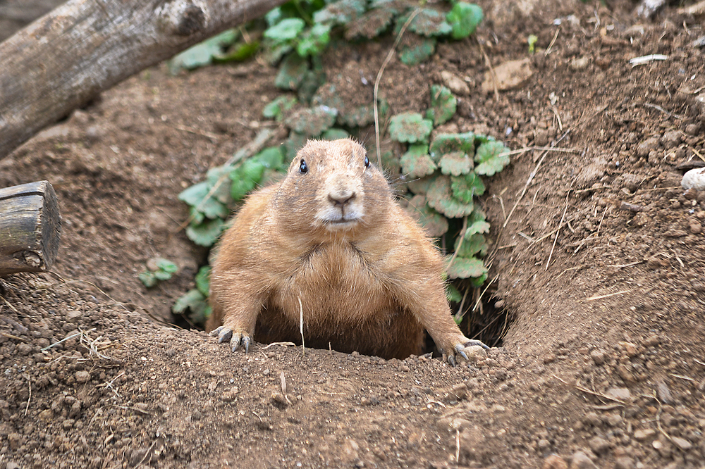 cotswolds-wildlife-park england gopher