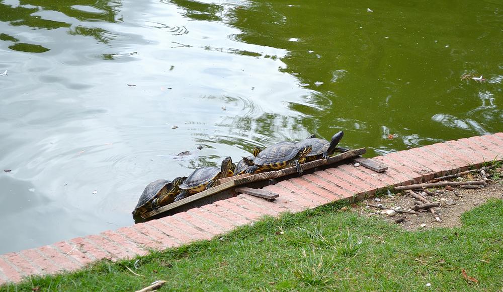 madrid spain park parque-de-el-retiro turtle pond