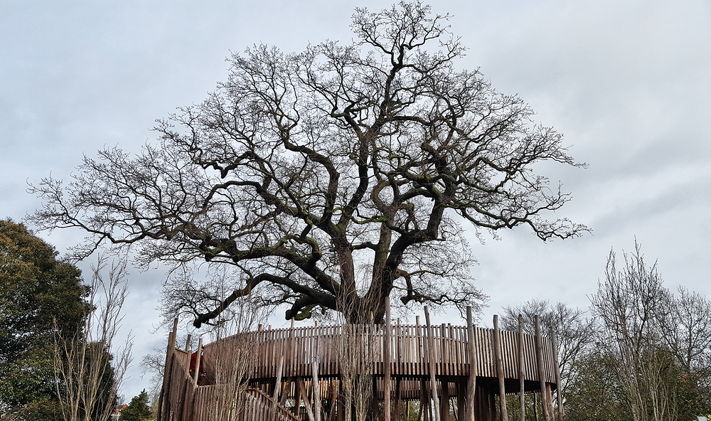 kew-gardens london england tree