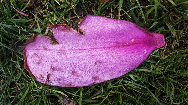 kew-gardens london england petal