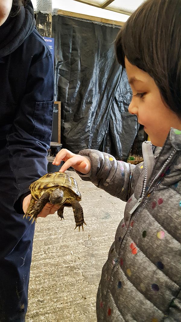 hounslow-urban-farm london england mia tortoise