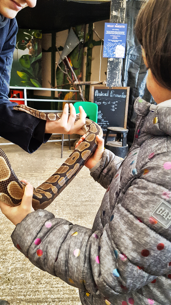 hounslow-urban-farm london england snake