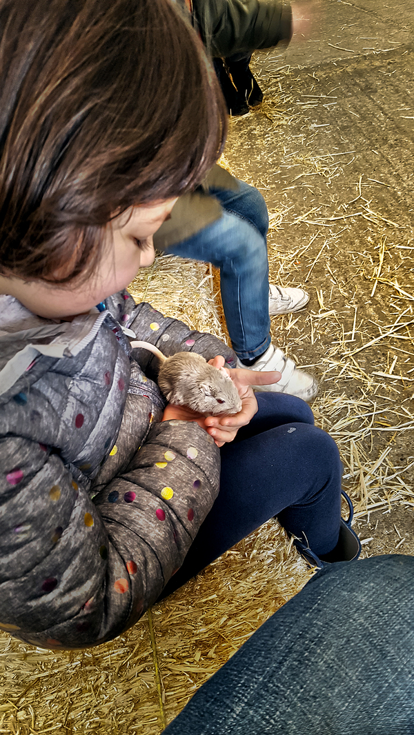 hounslow-urban-farm london england gerbil